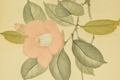 Hanging Scroll Japanese Painting Camellia Japan Antique Picture Art Asian b481