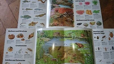 guardian booklets pond life and rockpool life nature