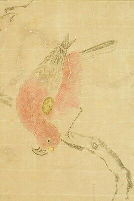 Hanging Scroll Japanese Painting Parrot Old Kano Japan Ink Antique 常信 狩野 b515