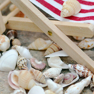 DIY Aquarium Beach Tiny Shells Nautical DIY Crafts Decor Mixed Shell Sea Element