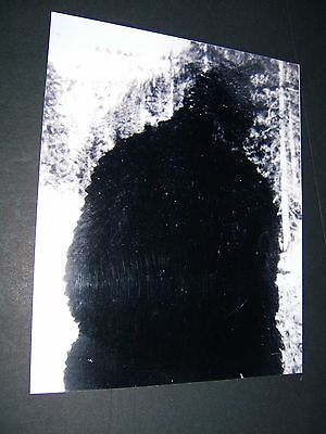 Rare Orig USEES Museum of Unexplained Oldest Known Bigfoot Photo 1940s Sasquatch