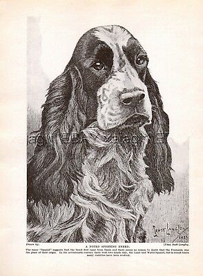 DOG Springer Spaniel English or Welsh Portrait Sketch, Beautiful Art Print 1930s