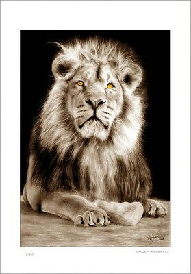 African  Lion     Drawing          Limited Edition