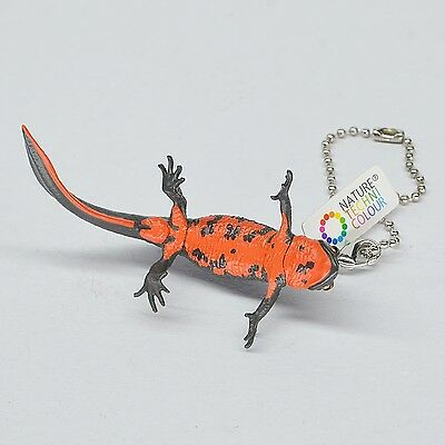 Kitan Japanese fire belly newt