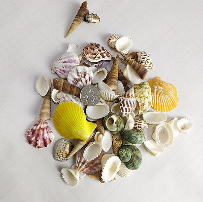 100g Mixed Assorted Sea Shells Natural Beach Seashells Aquarium Decor Craft