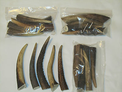 PACKET OF 5(plus one free) RED DEER HORN / ANTLER ARTS/CRAFT/TAXIDERMY (6-9cm.)