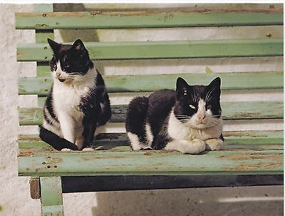 X Large Kids Sticker Kittens Decal Scrapbooking Cats on a Bench Black Kittys New