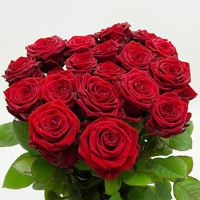 Red Roses in Federal, ca 50 bis 60cm Bunch, Flower delivery, Flowers