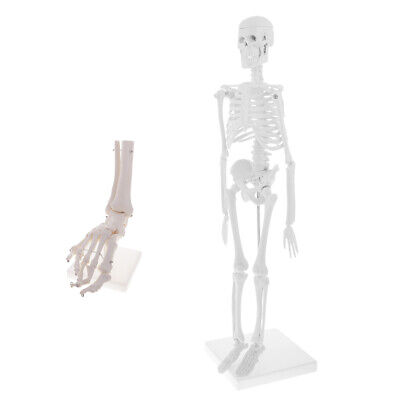 Anatomical 45cm Human Body Skeleton +1:1 Foot Joint Model Learning Resources