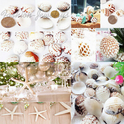 Lots Natural Seashells Starfish Fish Tank Aquarium Artificial Decor Craft DIY