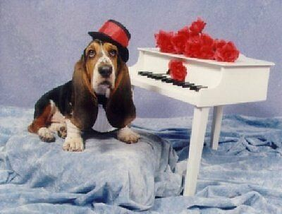 BASSET HOUND 100 Personalized Business Cards #0915