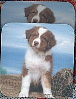 AUSTRALIAN SHEPHERD PUPPY Rubber Backed Coasters #0642