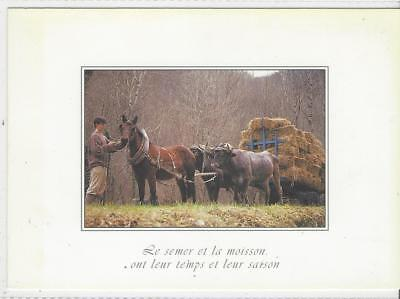 Horse Postcard -Horse AND Oxen in Harness - OMG!