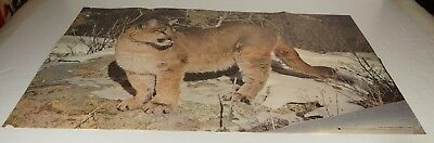 "COUGAR Poster 1978 Scholastic Magazine 22"" x 34"" Ernest Wilkinson PG1954"
