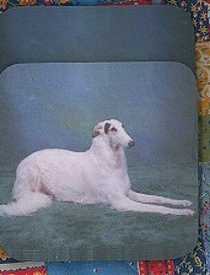BORZOI Rubber Backed Coasters #0958