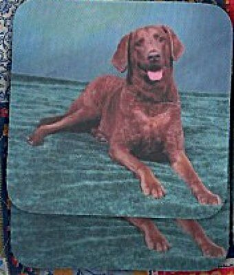 CHESAPEAKE BAY RETRIEVER Rubber Backed Coasters #0965