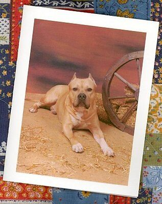 BULL TERRIER AM. STAFF.  Natural Canvas Tote Bags #0646