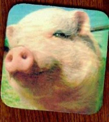 HOG EBAY WITH PIG Rubber Backed Coasters #0726