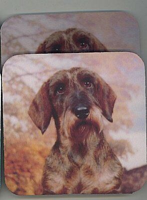 DACHSHUND WIREHAIRED Rubber Backed Coasters #0978