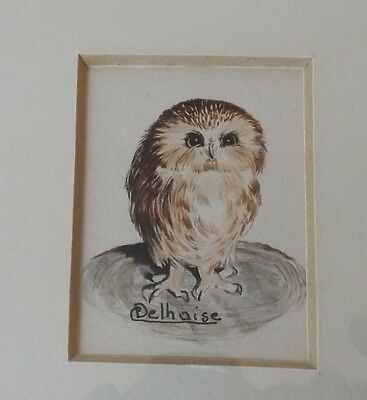 """Catherine Delhaise Watercolor - """"Saw Whet Owl"""" Framed and Matted"""