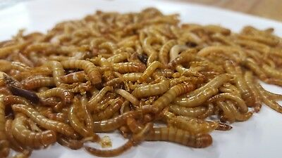 Live Mealworms - Free shipping 250, 500, 1000, 2000, 3000, 5000, 10000, 20000