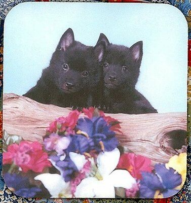 SCHIPPERKE PUPPIES Heavy Rubber Backed Mousepad #0626