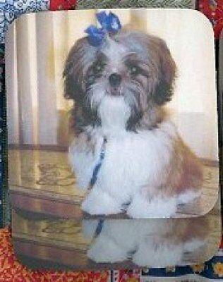 SHIH TZU PUPPY Rubber Backed Coasters #0803