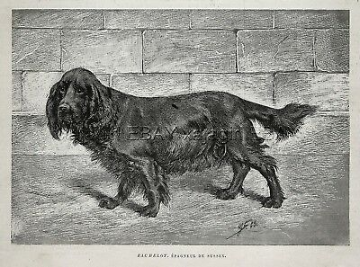 Dog Sussex Spaniel (Named), 1880s Antique Print & Article About History
