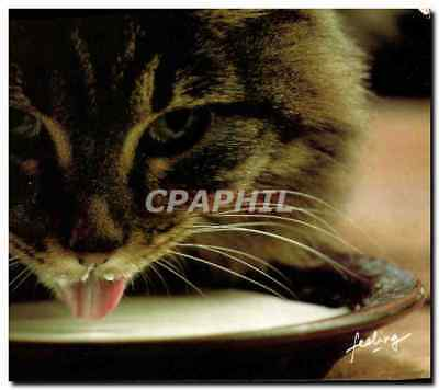 CPM Gentils chatons Chat Chaton