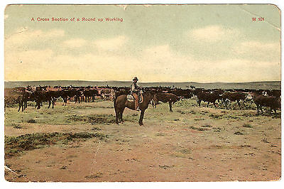USA vintage POSTCARD 1910 A CROSS SECTION OF A ROUND UP WORKING M101 MONTANA
