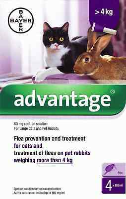 Advantage 80mg Spot-On Flea Solution Treatment for Large Cats & Rabbits over 4kg
