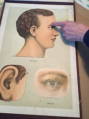 Antique Yaggy's Anatomical study for life-size mannikins.  The Paragon Edition