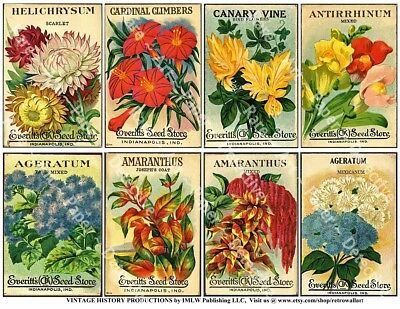 Antique Flower Seed Packets, Vintage Seed Packs, Garden Greenhouse Decor, 618a