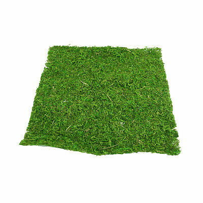 Natural Green Moss Sheet 38cm/15 Inches Square