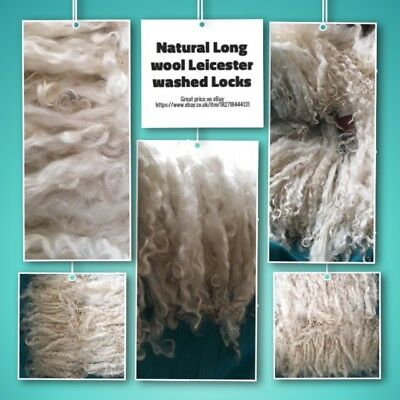 25g of Stunning Leicester Long Wool Hand Washed Sheep Locks