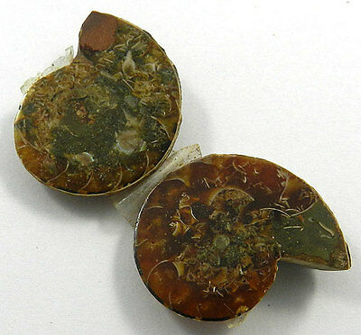 11.67 GM Attractive 1 Pair NATURAL AMMONITE FOSSIL 22x29MM Loose Gemstone