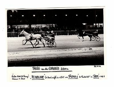 Original Press Photo Harness Trotting Racing Penelope 25.11.1962
