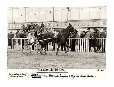 Original Press Photo Harness Trotting Racing Dora 28.1.1962 (1)