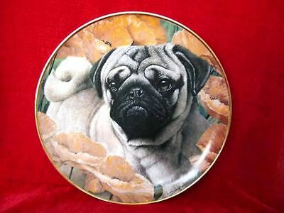 "8"" DANBURY MINT LIMITED EDITION PUG DOG PUPPY PLATE POPPY LOVE WITH 9ct GOLD RIM"
