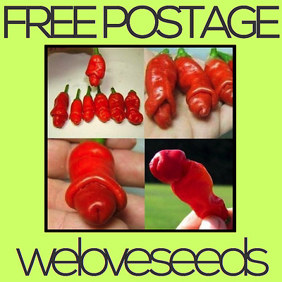 LOCAL AUSSIE STOCK - Rare Willy Penis Chili, Peter Pepper Seeds ~70x FREE SHIP