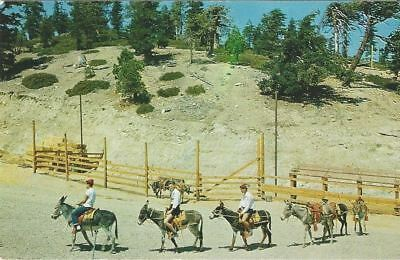 """Vintage collectible 3.5"""" x 5.5"""" POSTCARD Mt. Baldy Southern California unposted"""