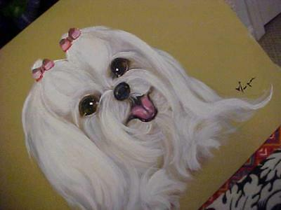 Maltese Original Painting Special Price!