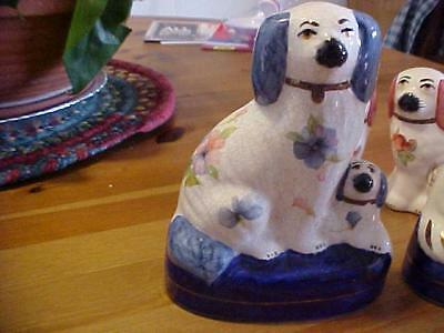 Dog And Puppy With Pansies Staffordshire England