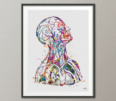 Human Anatomy Watercolor Print Science Art Cardiology Decor Medical Art Print