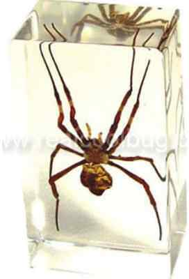 Spider: Medium Paperweight