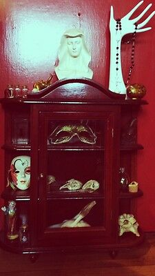 Cabinet Of Curiosities Real Animal Skulls Bones Taxidermy Assemblage