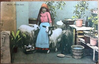 Antique Pc View Of Young Maltese Girl With Goats Vicenzo Galea Di Antonio Malta