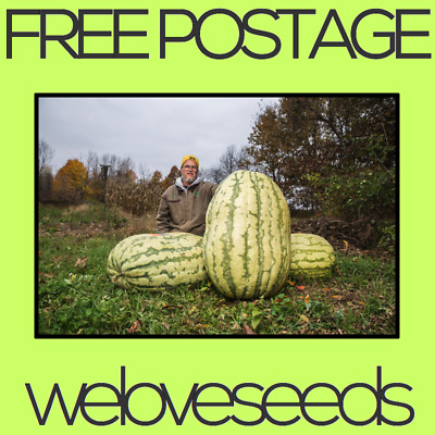 LOCAL AUSSIE STOCK - Giant Watermelon, Fruit Tree Plant Seeds ~15x FREE SHIPPING