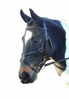 (Full, Brown) - GFS Leather Grackle Bridle. Brand New