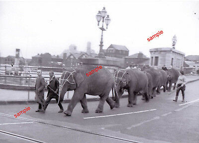 Elephants Gt Yarmouth 1961 Crossing Haven Bridge For Hippodrome Circus=See Below